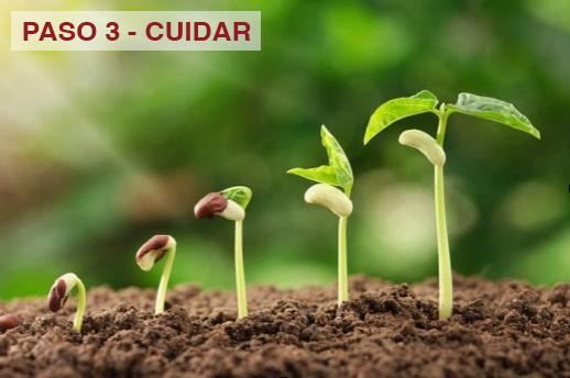 5 Pasos del Exito de Armand Puyolt - Paso 3, Seguimiento (Cuidar)