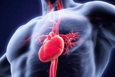 El corazon bombeando sangre por el sistema circulatorio
